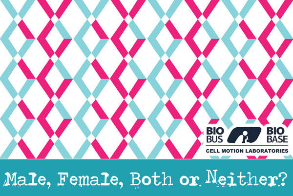 Male, Female, Both, or Neither?