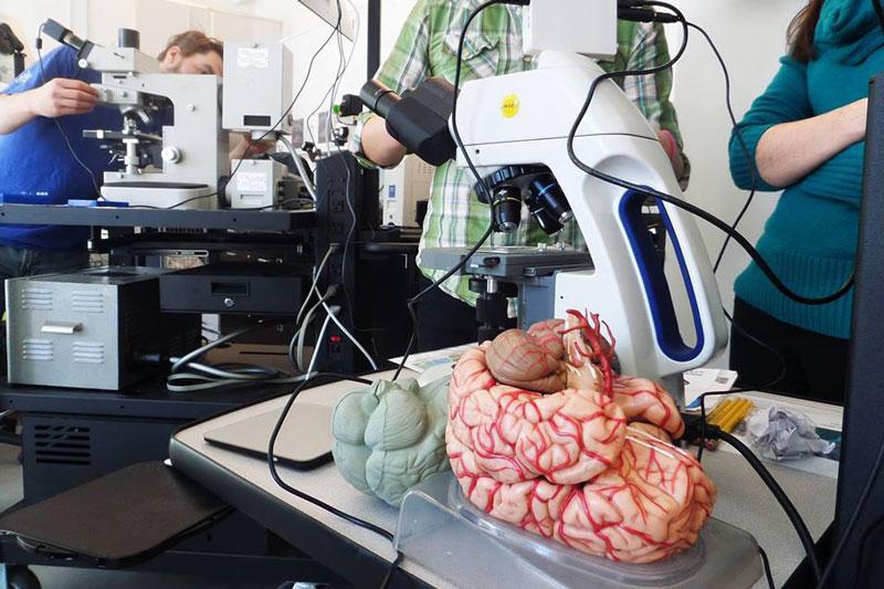 Brain Awareness at the BioBase