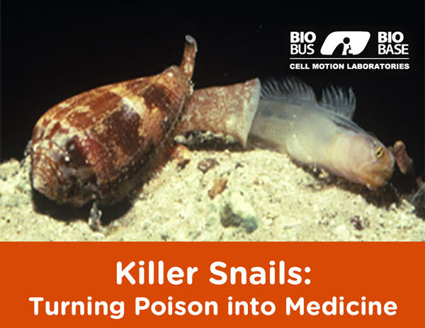 LISTEN - Killer Snails: Turning Poison into Medicine (Free Drinks, Fast Science)