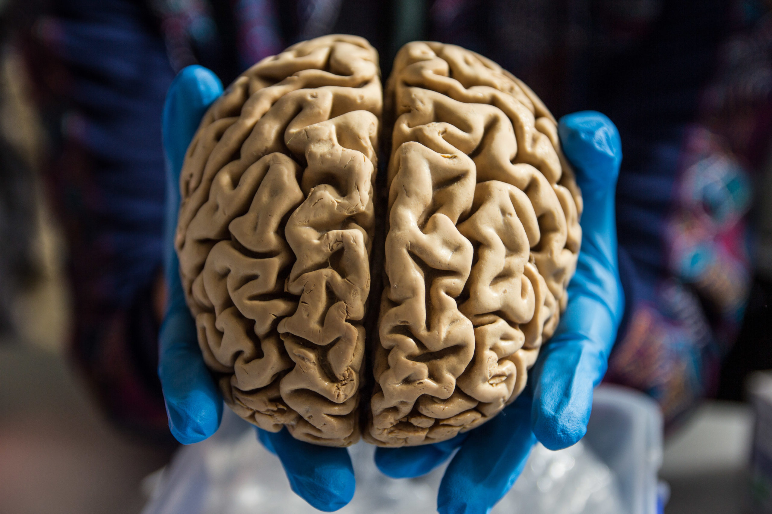 POSTPONED Brain Awareness Week at BioBus: A Closer Look at the Brain