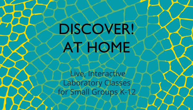 Discover! at Home - Live, Interactive Laboratory Classes